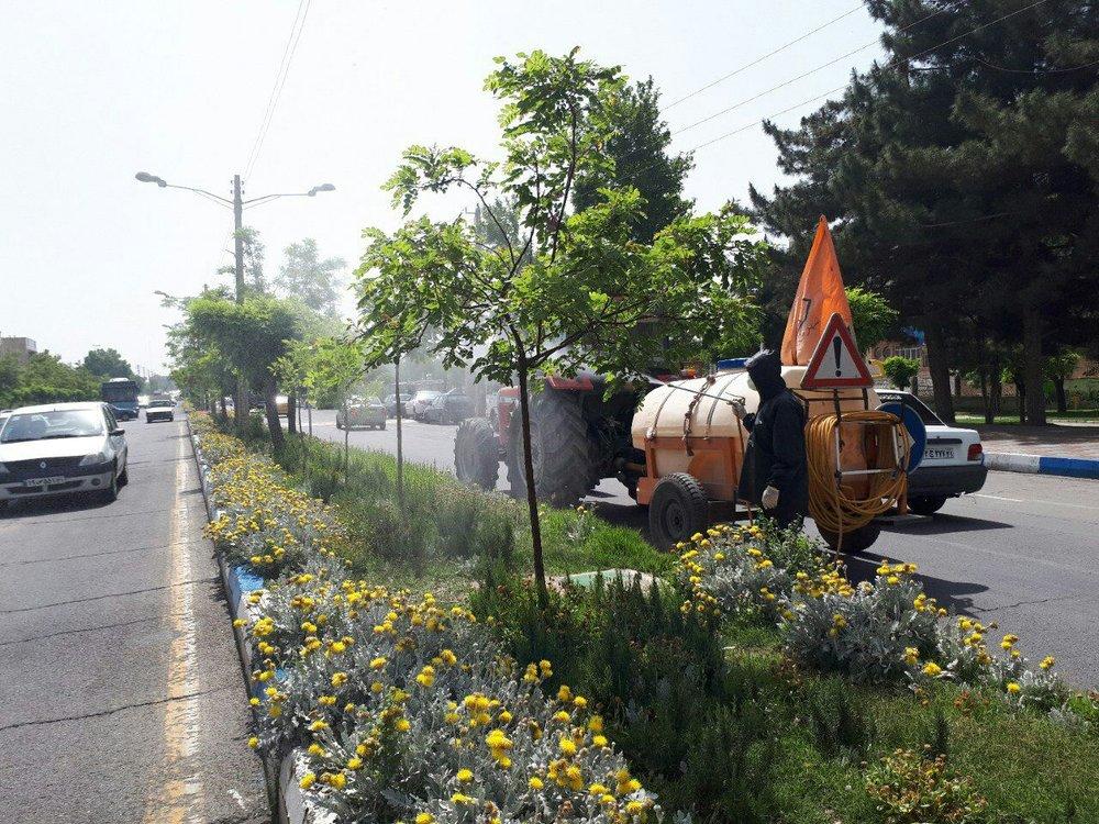 سمپاشی درختان شهر مطابق سنوات گذشته انجام شده است