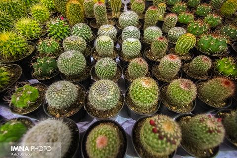 هشتمین نمایشگاه تخصصی گل و گیاه