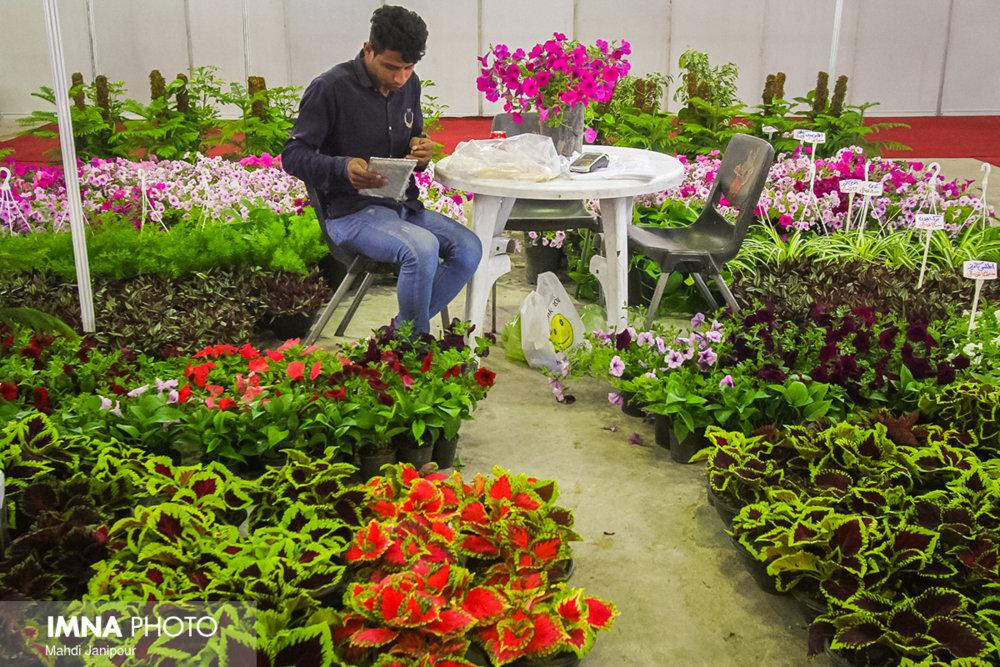 برگزاری جشنواره زمستانه در بازار گل و گیاه اصفهان