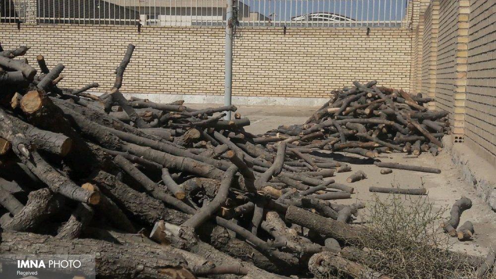 ۲۰ تُن چوب بلوط قاچاق در اصفهان کشف و ضبط شد