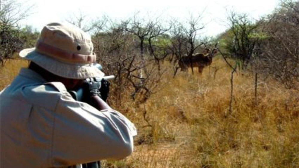 نحوه هزینهکرد درآمدهای ناشی از صدور پروانه شکار شفاف سازی شود