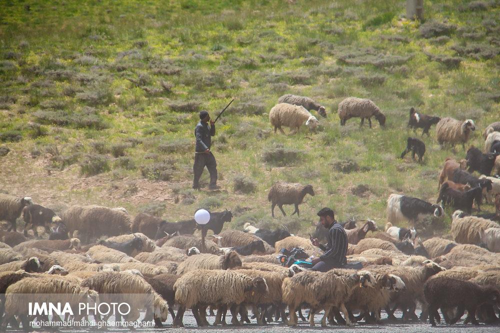 قرق مراتع غرب استان اصفهان از ۳۰ اردیبهشت شکسته می شود