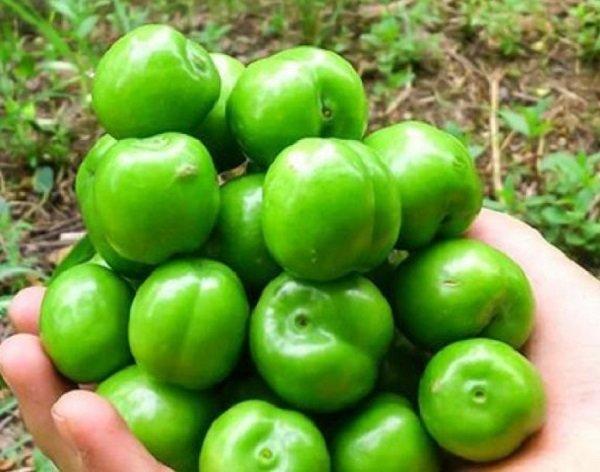 سه گروه نباید گوجه سبز بخورند/خواص شیره انگور در طب سنتی