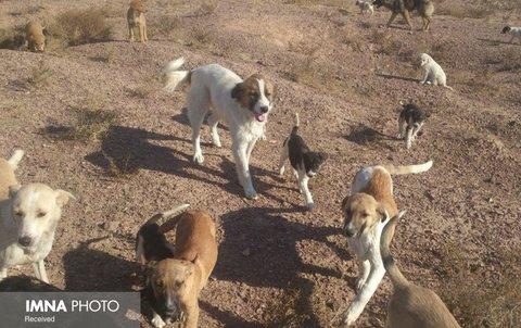 جمعآوری سگهای ولگرد در آبادان