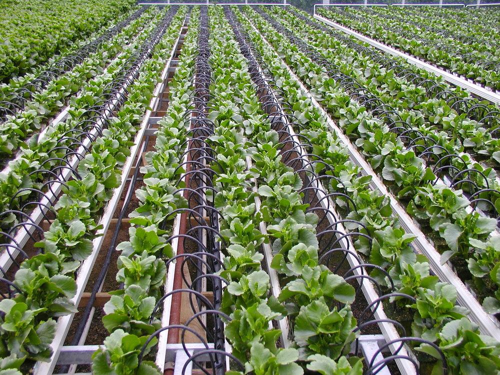 اجرای پروژههای کشاورزی مشارکتی با بخش خصوصی ابلاغ شد