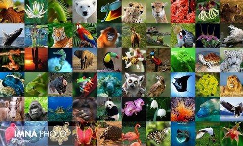 """""""ما بخشی از این راهحل هستیم"""" شعار روز جهانی تنوع زیستی"""
