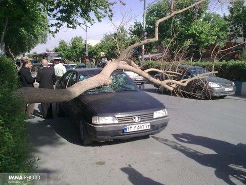 پارک خودرو زیر درختان خمیده یا غیرعادی ممنوع