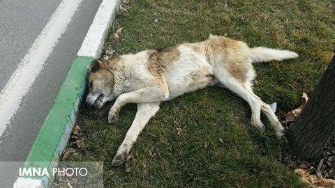 تیراندازی و کشتار سگهای ولگرد در تیران + عکس