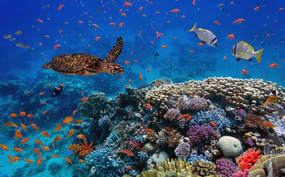 تلاش هلسینکی برای حفظ تنوع زیستی