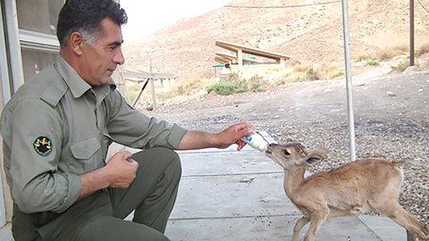 سرسبزی ایران مرهون از جان گذشتگی محیط بانان است