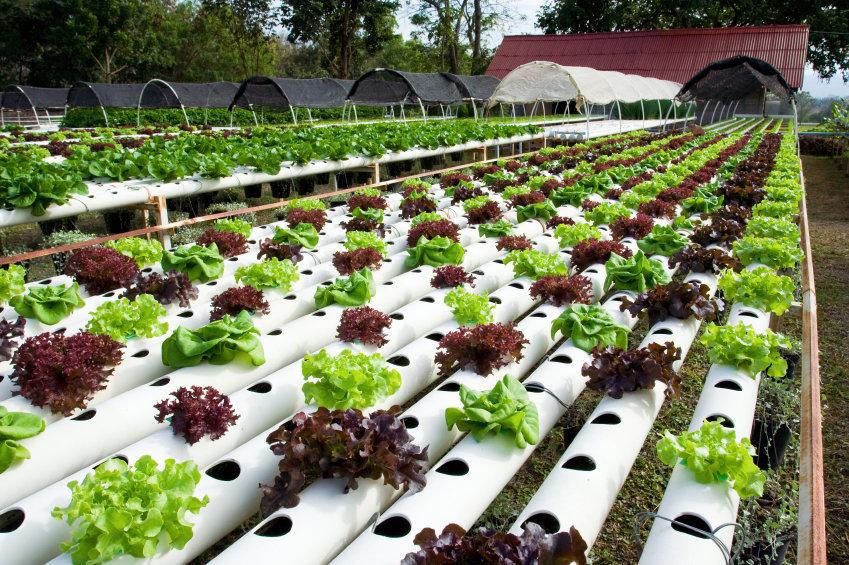 کاهش ضایعات کشاورزی یکی از مباحث مهم اقتصادی جهان است