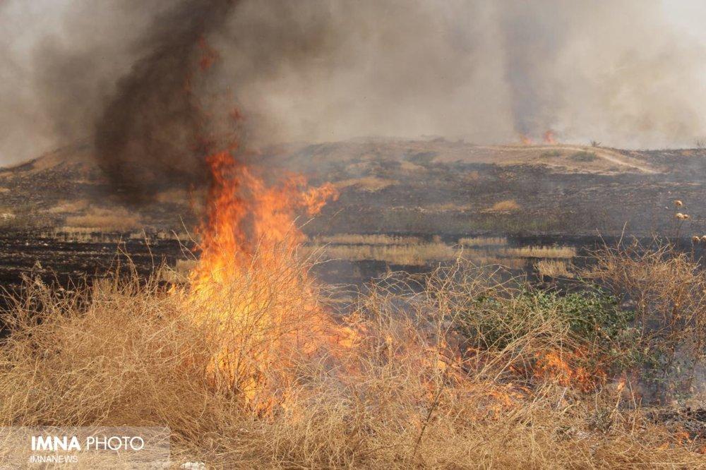 حریق در مزارع موسیان/خطر شیوع زنگ زرد در لردگان