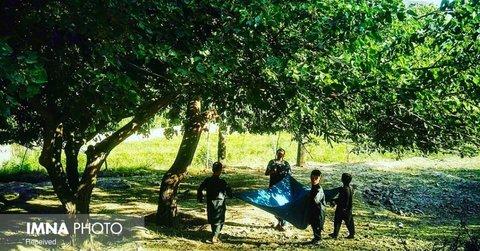 برپایی مراسم سنتی توتتکانی در بوستان پارک ملت