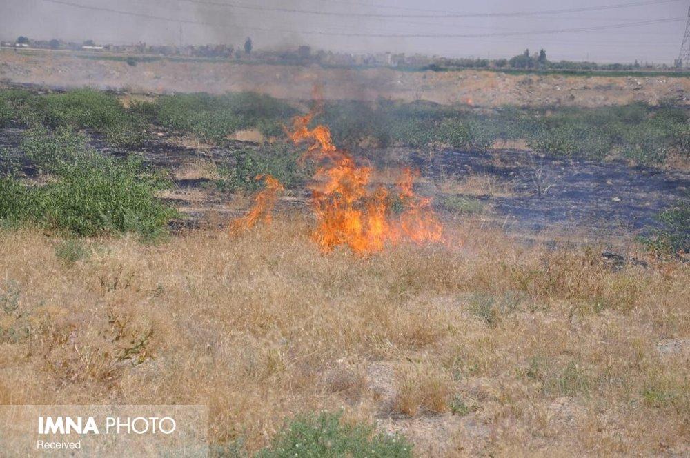 ۱۵ هکتار از اراضی ملی شوشمی در آتش سوخت/تولد ۲۰۰ نوزاد چند قلو در زنجان