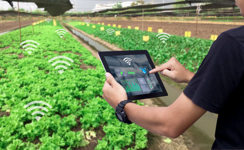 استارتاپ کشاورزی؛ بازوی توانمند کشاورزان در ارتقا صنعت غذا