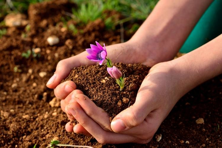 """تشکیل """"شورای حفاظت از خاک"""" در کشور ضروری است"""
