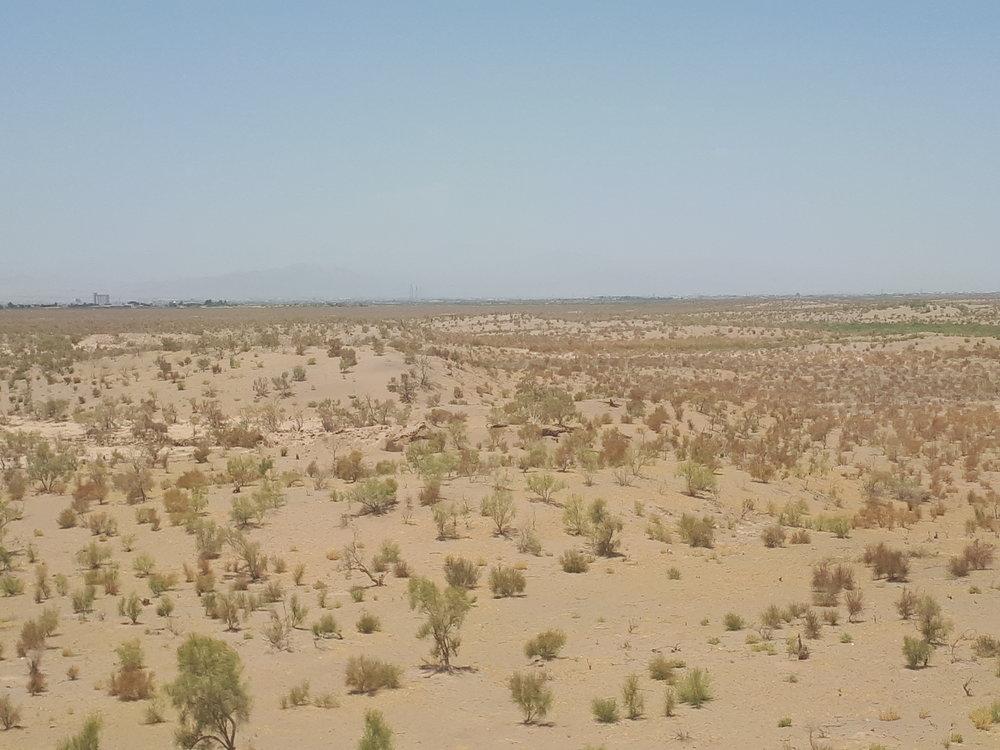 ۳۰۷ هزار هکتار جنگل دست کاشت در اصفهان وجود دارد