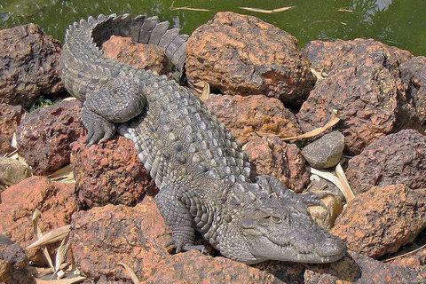 آغاز دومین مرحله جستوجوی تمساح در دریاچه چیتگر از سوی آتشنشانان