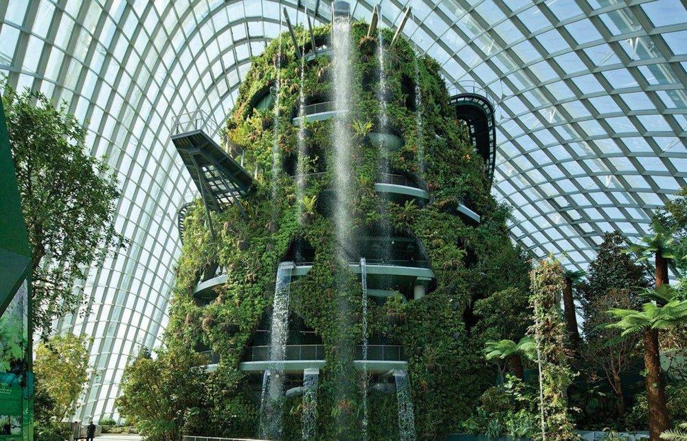 افزایش مزارع شهری در سنگاپور