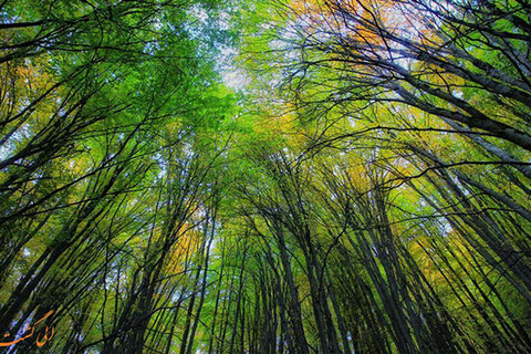 UNESCO votes to place Iran's ancient Hyrcanian forests on list of World Heritage Sites