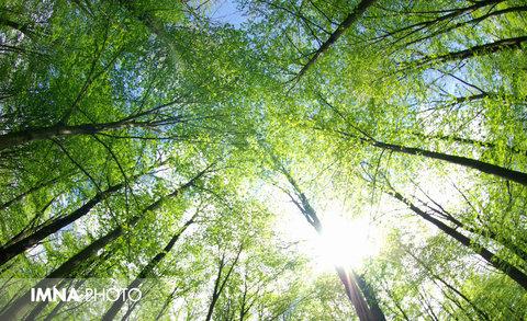 حفاظت از محیط زیست عامل افزایش کیفیت زندگی شهری است
