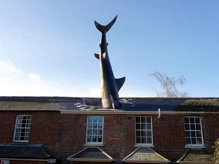 سقوط کوسه بر سقف خانهای در انگلستان!