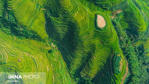 مزارع برنج Ping'an در چین