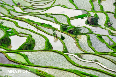 مزارع برنج Jinping در چین