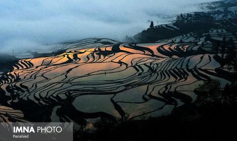 مزارع برنج Southern در چین