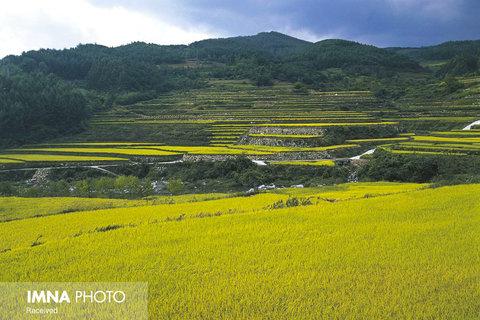 مزارع برنج Hapcheon در کره جنوبی