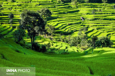 مزارع برنج Bahundanda در نپال