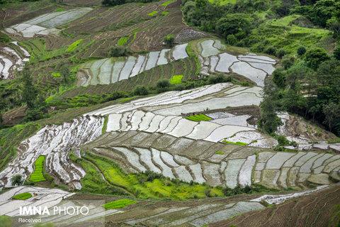 مزارع برنج Dakshinkali در نپال