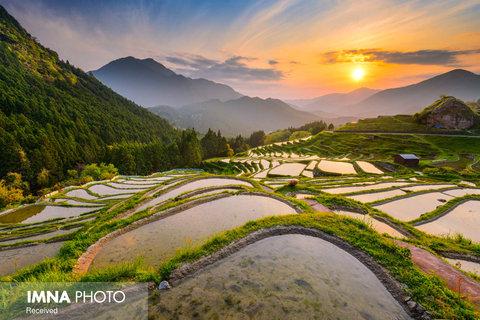 مزارع برنج Maruyama Senmaida در ژاپن