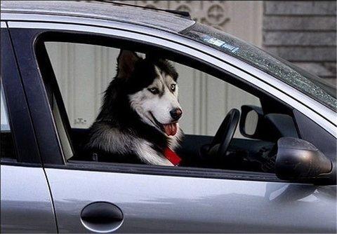 ضوابط نگهداری حیوانات در محیطهای شهری چیست؟