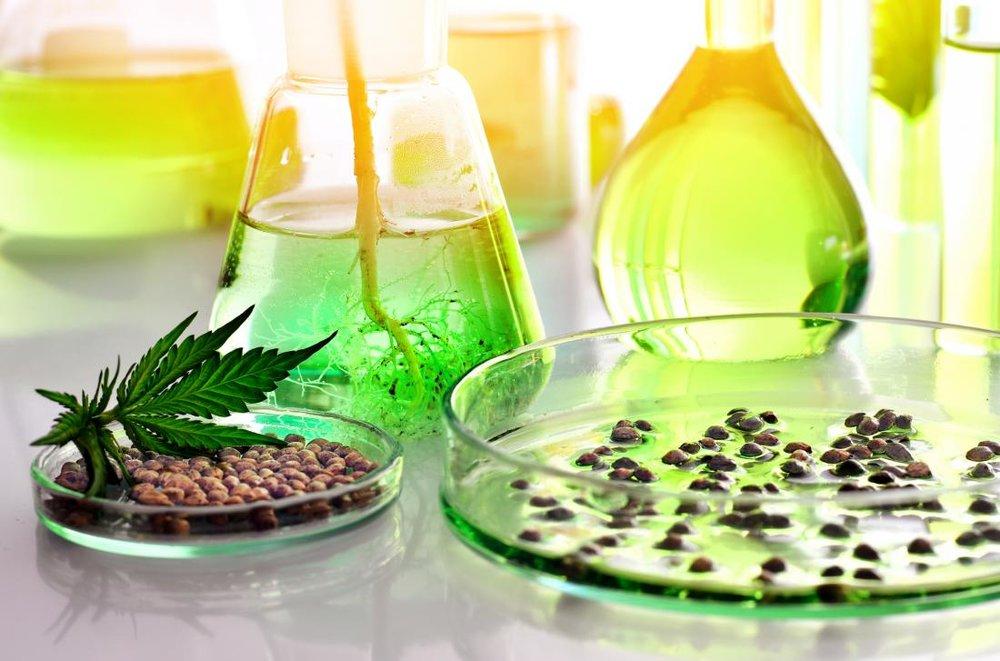 این گیاه جایگزین داروهای ضد درد میشود