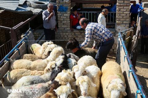 قیمت عرضه دام زنده در عید سعید قربان ۴۷ هزار تومان است