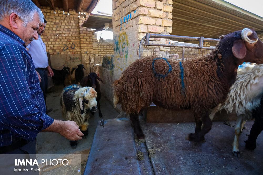 پرهیز از عرضه و ذبح دام در شهر مشهد