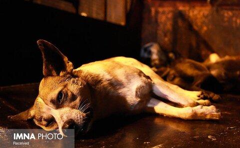 ۷۴ ضربه شلاق برای سگ کشی در گیلان