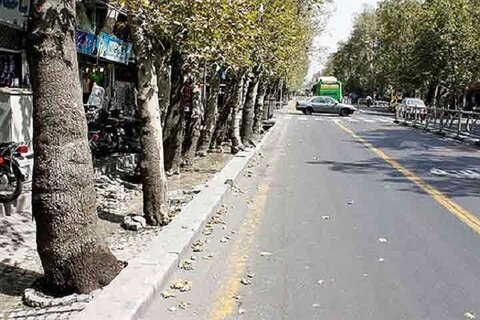 اجرای طرح شناسنامهدار کردن درختان شاهرود