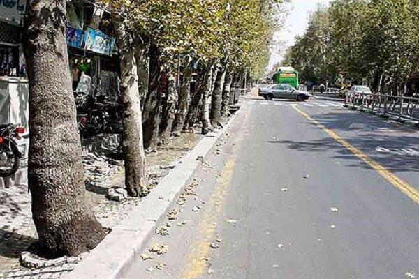 پیشبینی اعتبار برای پلاککوبی ۲۰ درصد درختان شهر