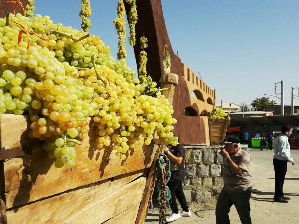 برداشت ۱۰ هزار تن انگور از سطح زیر کشت شهرستان خوانسار