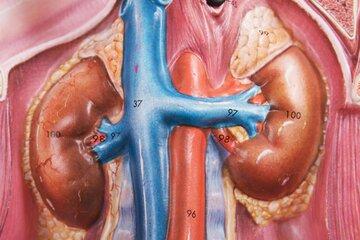 کووید-۱۹ موجب آسیب جدی کلیهها میشود