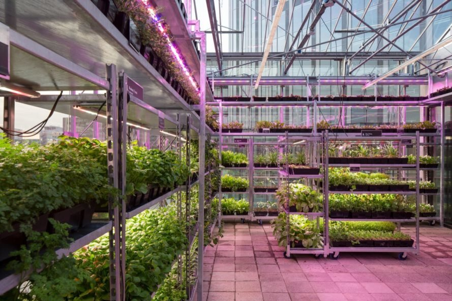مزرعه شهری در قلب اوترخت
