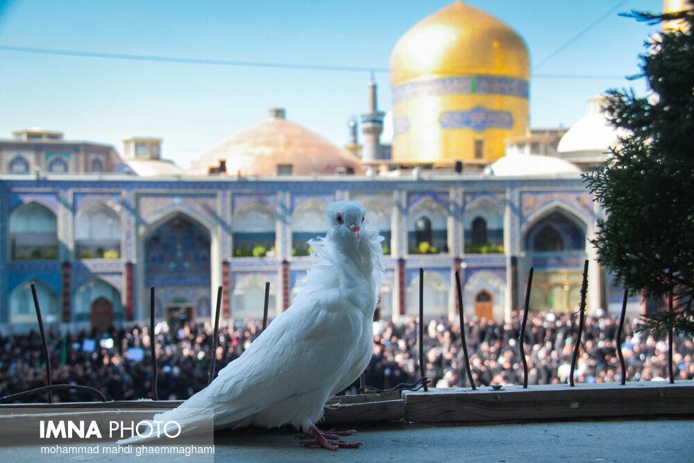 مشهدالرضا مهیای جشن میلاد پیامبر اکرم (ص)