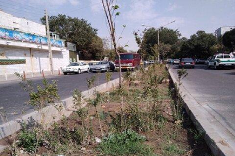 احداث بیش از ۳ هزار مترمربع فضای سبز در شهرک بهاران سنندج