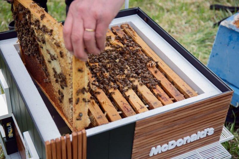 عملیات سرشماری زنبورستانهای کشور انجام نمیشود