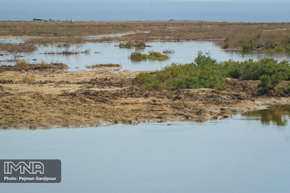 دو میلیون و ۲۴۱ هزار مترمکعب آب وارد تالاب گاوخونی شد