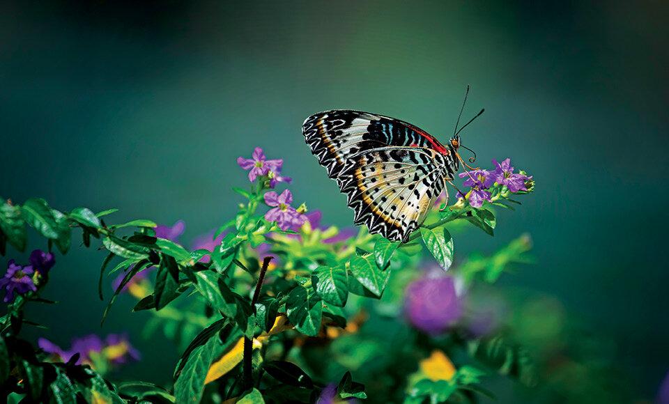 بزرگترین باغ پروانه در ترکیه