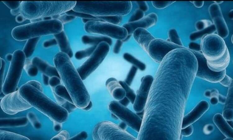  درمان بیماران با باکتریها