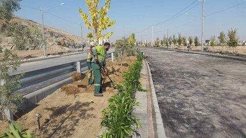 کاشت بیش از ۱۵ هزار اصله درخت در ایرانشهر
